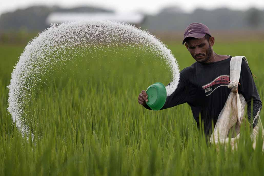 A farmer casts urea fertilizer in a rice plantation on the expropriated and now redistributed farm of El Charcote in the central state of Cojedes